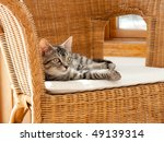 Cat On Chair  Symbol Of Comfort