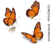 Stock photo beautiful three monarch butterfly isolated on white background 491428621