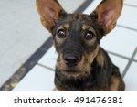 Street Dog With Sad Eyes...