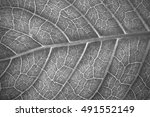 black   white leaves close up... | Shutterstock . vector #491552149