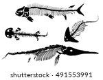 ancient skeletons of fish