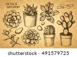 succulents and cacti sketch set | Shutterstock .eps vector #491579725
