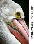 Pelican Head Close Up