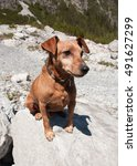 Small photo of Brown Pinscher sitting on a stone in the alps