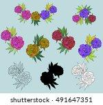 vector peony flowers