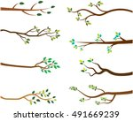 vector set of tree branches... | Shutterstock .eps vector #491669239
