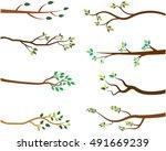 vector set of tree branches... | Shutterstock .eps vector #491669239