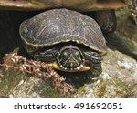 turtle   Shutterstock . vector #491692051