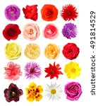 selection of different flowers... | Shutterstock . vector #491814529