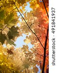 yellow maple. autumn in october | Shutterstock . vector #491841937