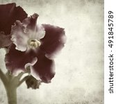 Small photo of textured old paper background with red and white african violet