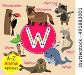 cute children zoo alphabet w... | Shutterstock .eps vector #491883001