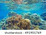 Underwater Landscape With Cora...