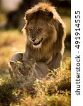 lion | Shutterstock . vector #491914555