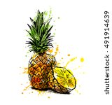 colored hand sketch pineapple.... | Shutterstock .eps vector #491914639