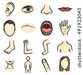 body parts  organ set  cartoon... | Shutterstock .eps vector #491923045