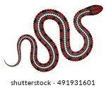 coral snake vector illustration....   Shutterstock .eps vector #491931601
