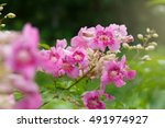 beautiful background pink... | Shutterstock . vector #491974927