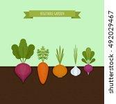 vegetable garden banner.... | Shutterstock .eps vector #492029467
