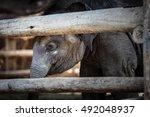 Close Up Of Elephant Baby...