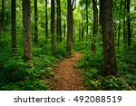 trail through tall trees in a... | Shutterstock . vector #492088519