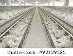 Small photo of Photo of a Poultry Farm of an Agro project