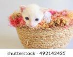 kitten isolated on white... | Shutterstock . vector #492142435