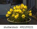 Dainty Bright Yellow  Miniatur...