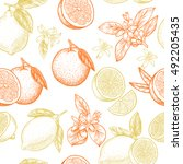 lemons and oranges. vector... | Shutterstock .eps vector #492205435