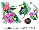 pink flamingo toucan  exotic... | Shutterstock .eps vector #492215941