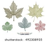 vector leaves isolated and... | Shutterstock .eps vector #492308935