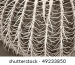 cactus plant  in the family of... | Shutterstock . vector #49233850