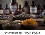 fresh medicinal  healing herbs... | Shutterstock . vector #492419275