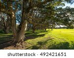 Beautiful Park In Sydney...