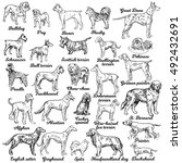 dogs set. vector. breeds of dog.... | Shutterstock .eps vector #492432691