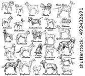 dogs set. vector. breeds of dog.... | Shutterstock .eps vector #492432691