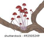 Group Of Little Red Marasmius...