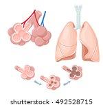 human lungs anatomy. internal... | Shutterstock .eps vector #492528715