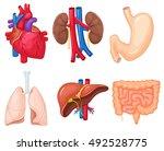 human organs anatomy  heart ... | Shutterstock .eps vector #492528775