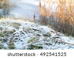 Frozen Blades Of Grass Covered...