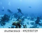 scuba divers swim over colorful ... | Shutterstock . vector #492550729