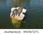 Two Turtles On The Rock In The...