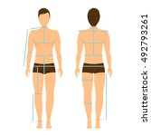 man body front and back for... | Shutterstock .eps vector #492793261