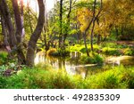 mangrove trees in a peat swamp... | Shutterstock . vector #492835309