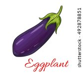 sketched eggplant vegetable... | Shutterstock .eps vector #492878851