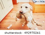 naughty dog home alone   yellow ... | Shutterstock . vector #492970261