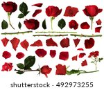 Roses Set With Isolated White...