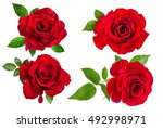rose isolated on the white... | Shutterstock . vector #492998971