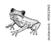 sketch of doodle frog. | Shutterstock .eps vector #493013965
