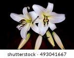 white lilies on deep dark red... | Shutterstock . vector #493041667